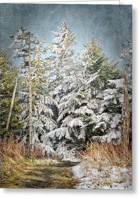 Snow Covered Trees Greeting Card by Cheryl Davis