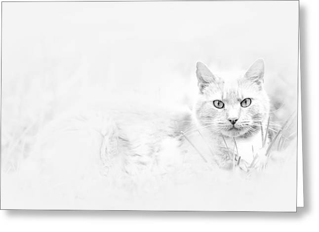 Snow Eyes Greeting Card