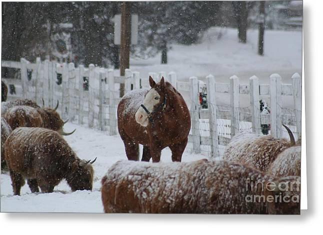 Snow Horse Greeting Card by Linda Jackson