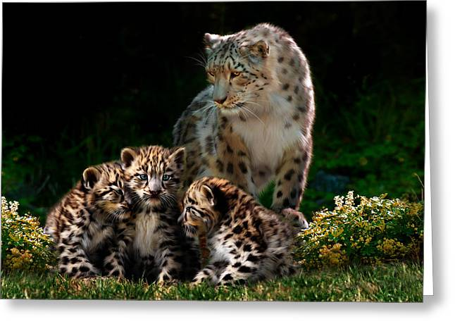 Snow Leopard And Cubs Greeting Card by Julie L Hoddinott