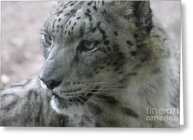 Snow Leopard Profile Greeting Card by Chris Hill
