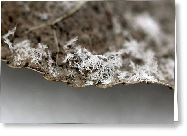Snow On A Leaf Greeting Card
