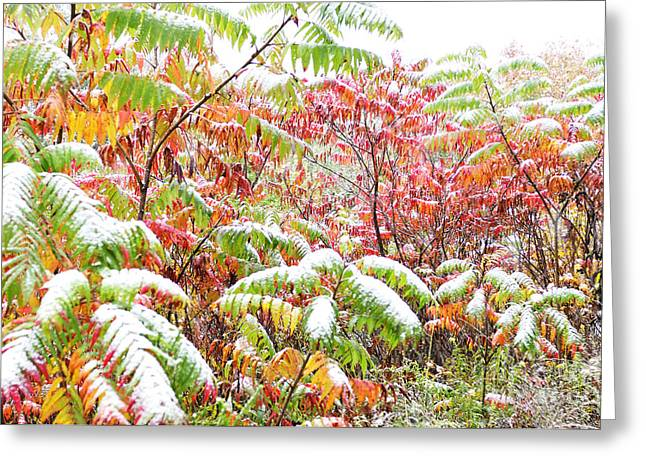 Snow On Sumac  Greeting Card by Thomas R Fletcher