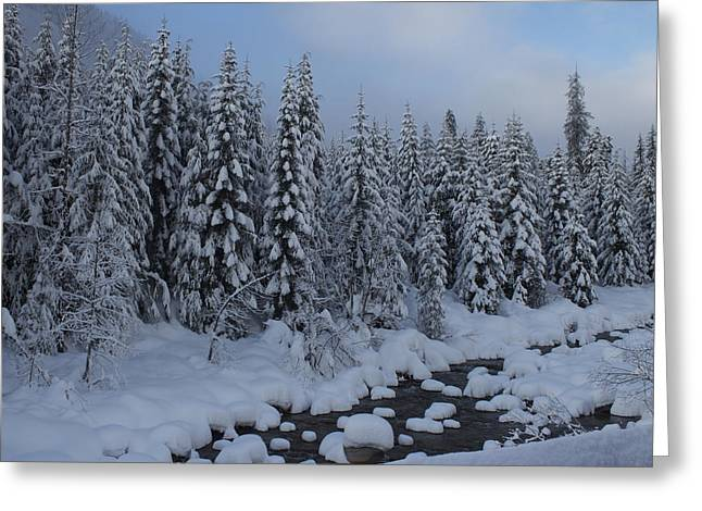 Greeting Card featuring the photograph Snow Pines by Sylvia Hart