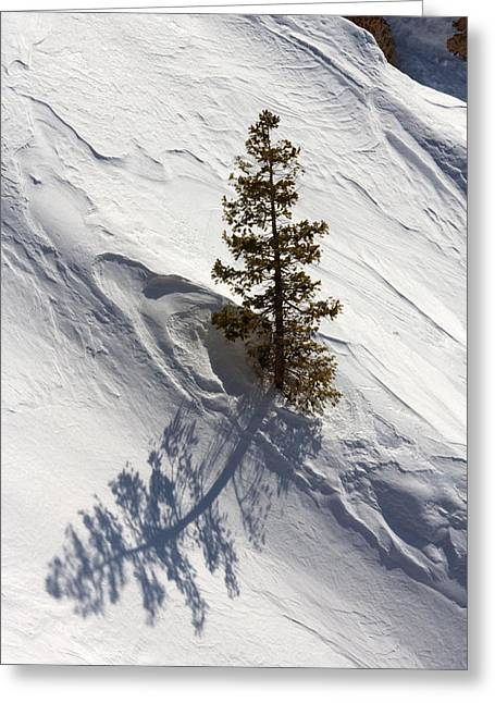 Greeting Card featuring the photograph Snow Shadow by Karen Lee Ensley