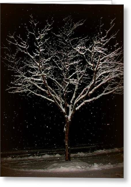 Snow Shower In The Night Greeting Card