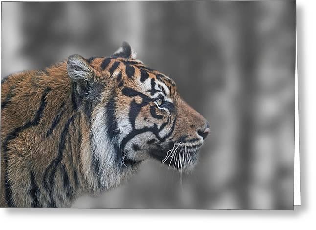 Snow Tiger Greeting Card by Garry Rawlinson
