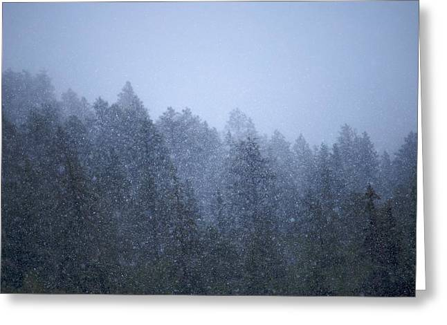 Snowfall In The Forest Greeting Card by C Thomas Willard