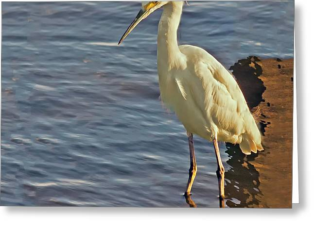 Snowy Egret At Sunrise Greeting Card