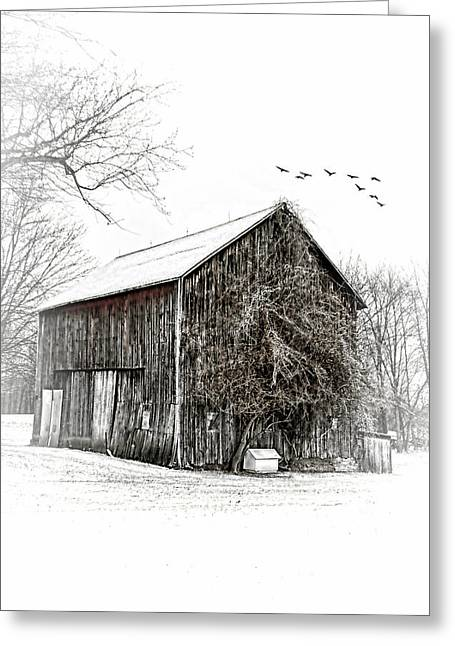 Snowy Morning Greeting Card by Mary Timman