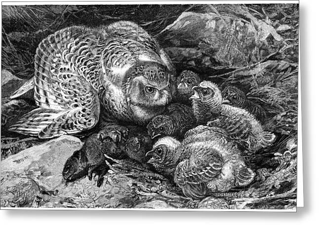 Snowy Owl And Chicks, 19th Century Greeting Card