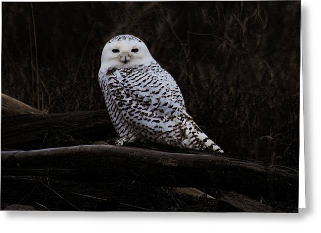 Snowy Owl Two Greeting Card
