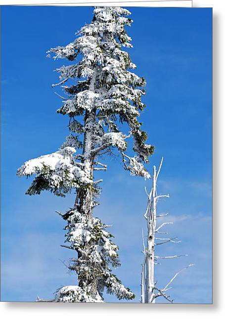 Snowy Pine And Blue Sky Greeting Card by Twenty Two North Photography