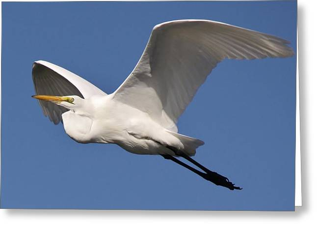 Soaring Greeting Card by Paulette Thomas