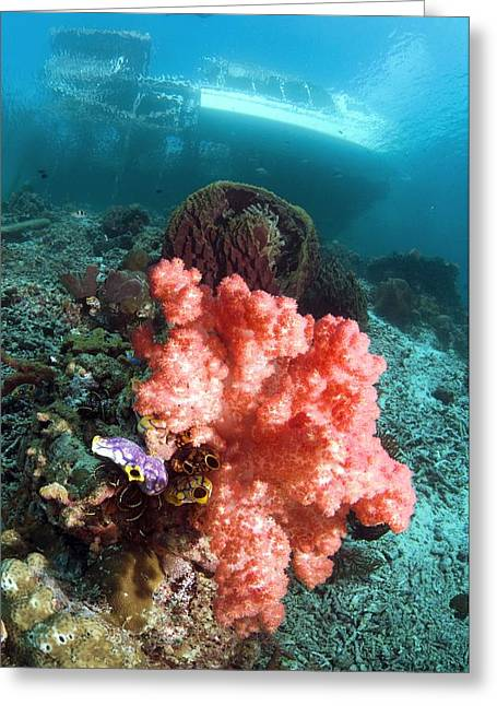 Soft Coral And Sea Squirts Greeting Card