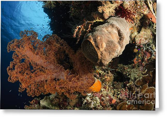 Soft Coral Seascape, Indonesia Greeting Card by Todd Winner