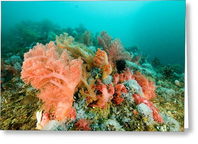 Soft Corals Of Many Hues Cover A Reef Greeting Card