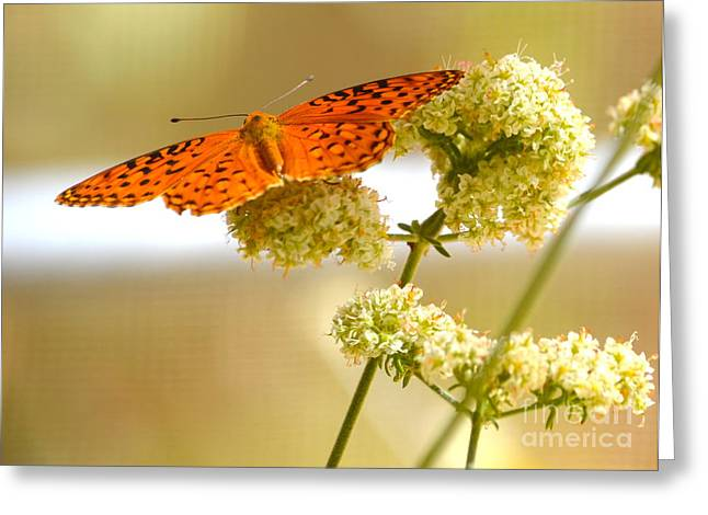 Soft Greeting Card by Johanne Peale