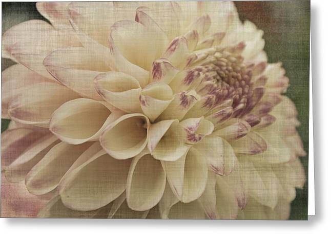 Soft Lady Greeting Card by Terrie Taylor