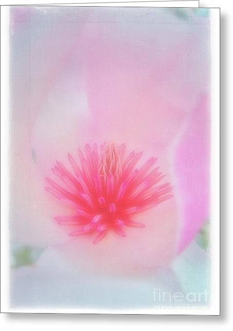 Soft Magnolia Greeting Card by Judi Bagwell