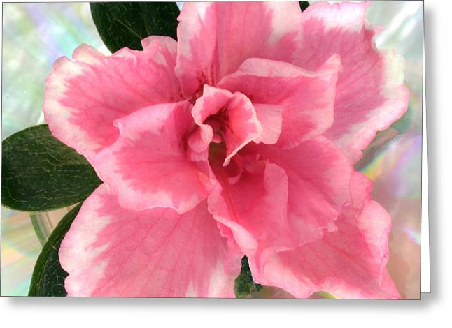 Soft Pink Azalea Greeting Card by Terence Davis