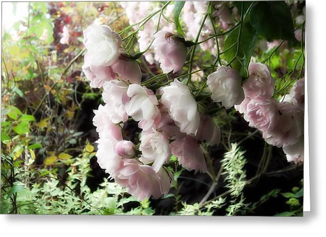 Soft Pink Greeting Card by Lee Yang