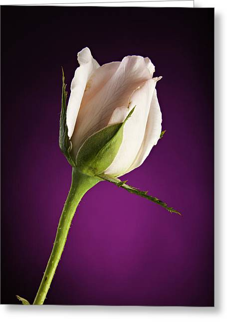Soft Pink Rose On Deep Pink Background Greeting Card by M K  Miller