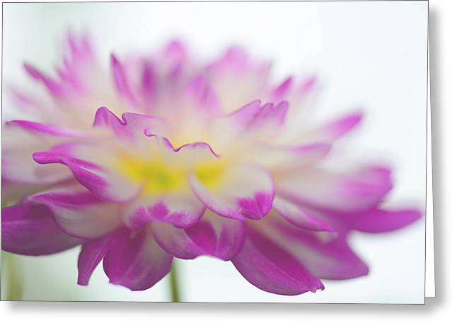 Softness Greeting Card by Michelle Armstrong