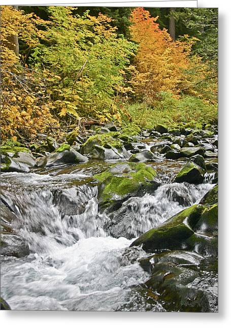 Sol Duc Fall Greeting Card