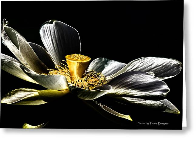 Greeting Card featuring the photograph Solarized Lotus A by Travis Burgess