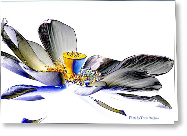 Greeting Card featuring the photograph Solarized Lotus C by Travis Burgess