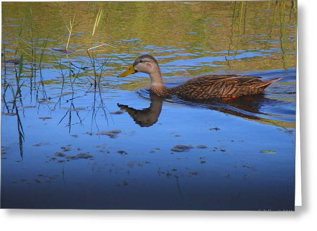 Solitary Duck In Autumn Greeting Card