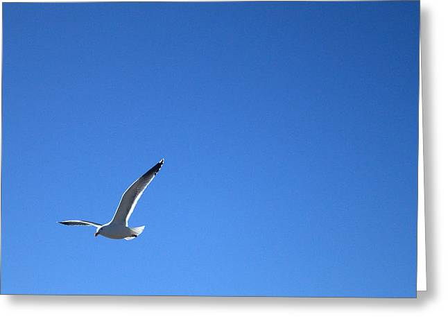 Solitary Gull Greeting Card by Michael Swanson