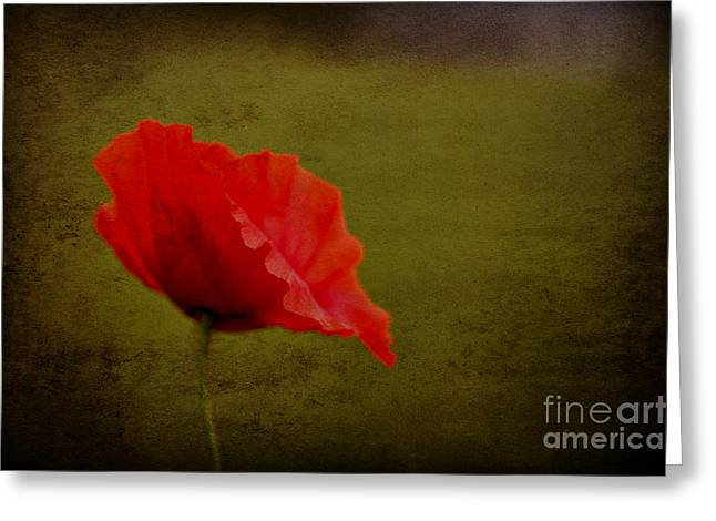 Solitary Poppy. Greeting Card by Clare Bambers