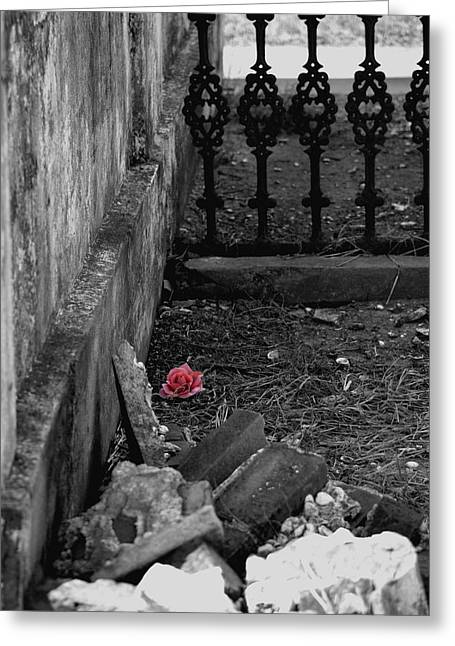 Solitary Rose Greeting Card by Renee Barnes