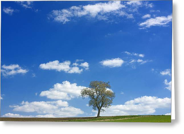 Solitary Tree In Green Meadow Greeting Card