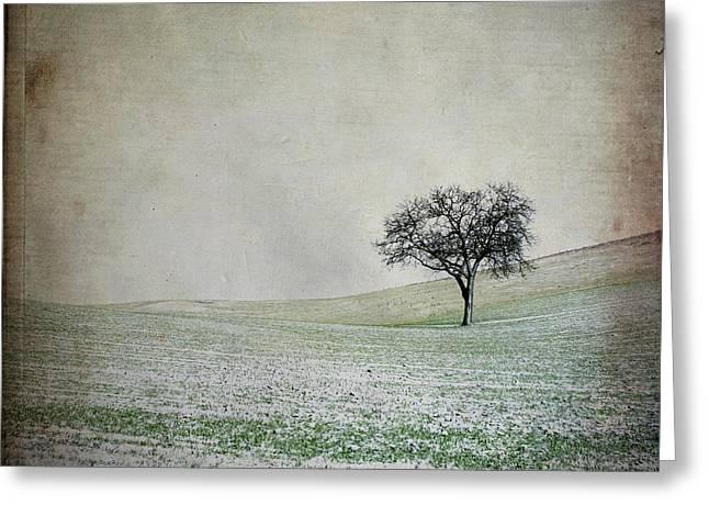 Solitary Tree In Winter. Auvergne. France. Europe Greeting Card by Bernard Jaubert