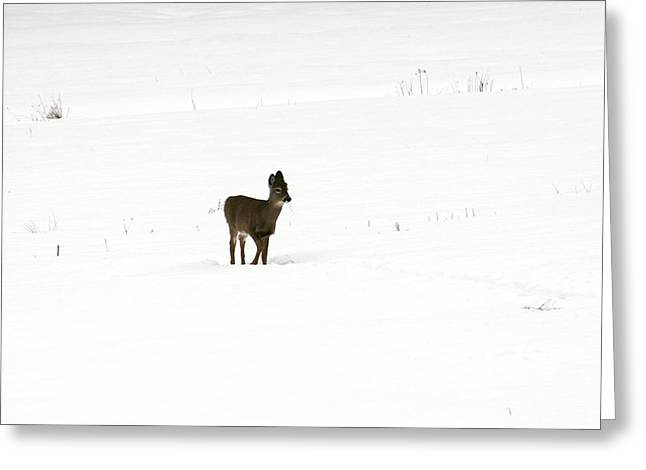 Solitude Greeting Card by Shirley Mailloux