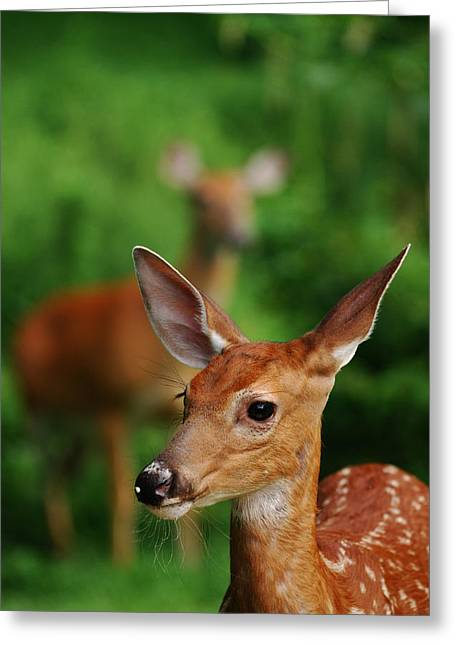 Someone To Watch Over Me Greeting Card by Lori Tambakis