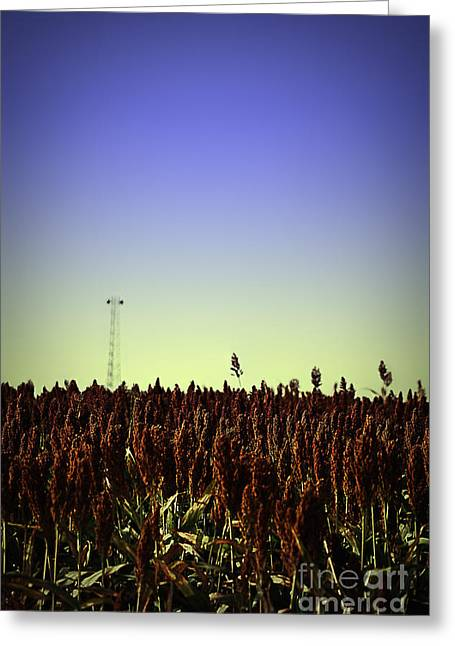 Sorghum Fields Forever Greeting Card by Trish Mistric