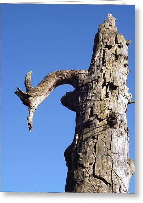 Greeting Card featuring the photograph Soul Of The Wood Pecker by Gerald Strine