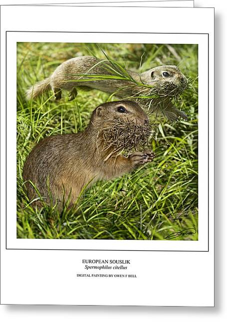 Sousliks Collecting Bedding Greeting Card by Owen Bell