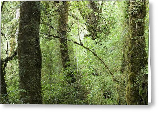 Southern Forest Greeting Card by Christian Heeb