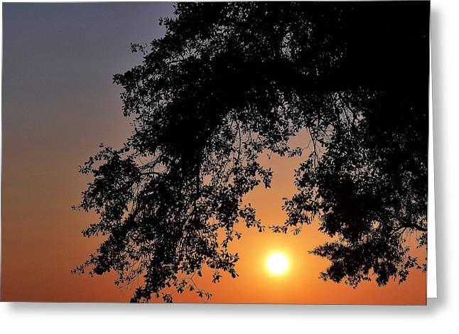 Southern Sky Greeting Card