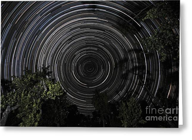 Southern Sky Star Trails Over Banksia Greeting Card by Philip Hart