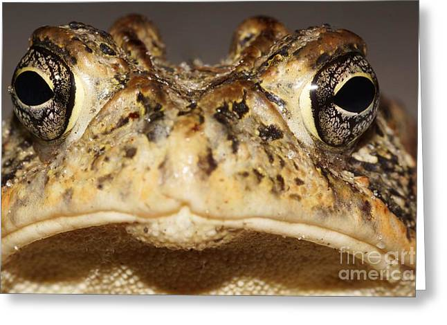Southern Toad Close Up Greeting Card by Lynda Dawson-Youngclaus
