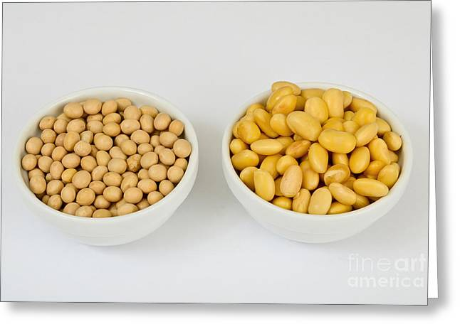 Soy Beans Greeting Card by Photo Researchers