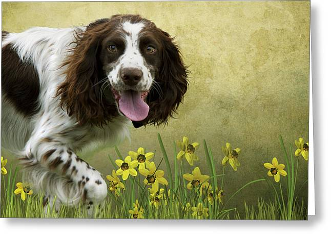 Spaniel With Daffodils Greeting Card by Ethiriel  Photography