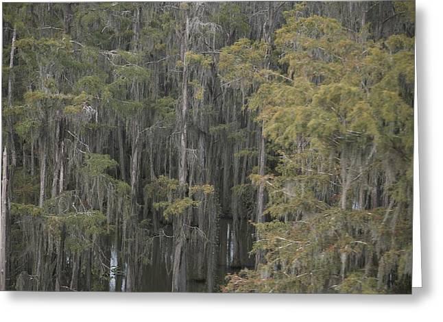 Spanish Moss-draped Trees In Alabama Greeting Card