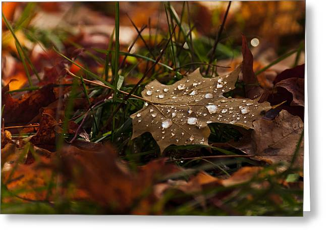 Greeting Card featuring the photograph Sparkling Gems by Cheryl Baxter